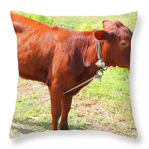 Cow Throw Pillow featuring the photograph Jamaican Cow by Debbie Levene