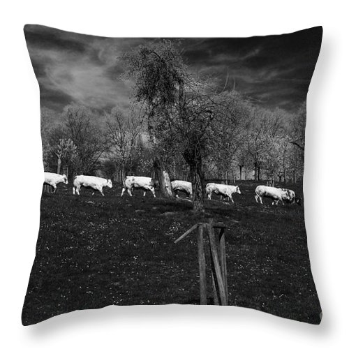 Cow Line Throw Pillow featuring the photograph Line Of Cows by Brothers Beerens