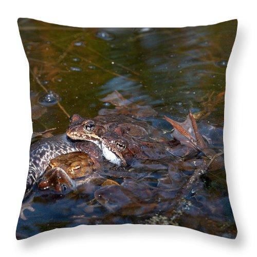 Lehtokukka Throw Pillow featuring the photograph Mixed Frogs by Jouko Lehto