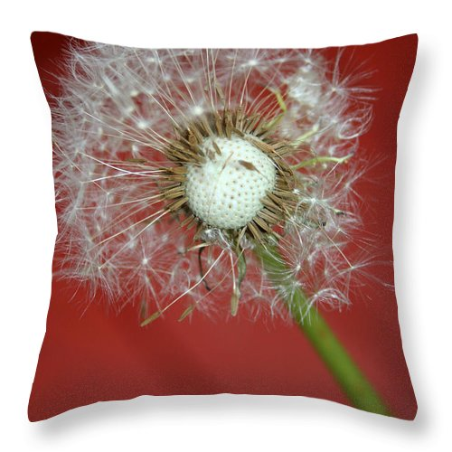 Nature Throw Pillow featuring the photograph Nature Red by Linda Sannuti