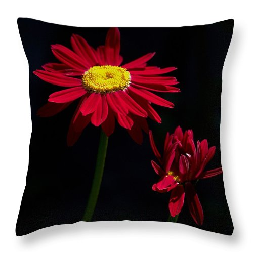 Lehtokukka Throw Pillow featuring the photograph Red by Jouko Lehto