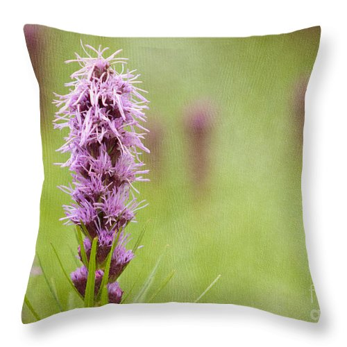 Floral Throw Pillow featuring the photograph Tango by Beve Brown-Clark Photography