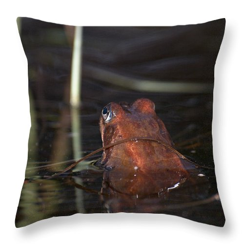 Lehtokukka Throw Pillow featuring the photograph The Common Frog 2 by Jouko Lehto