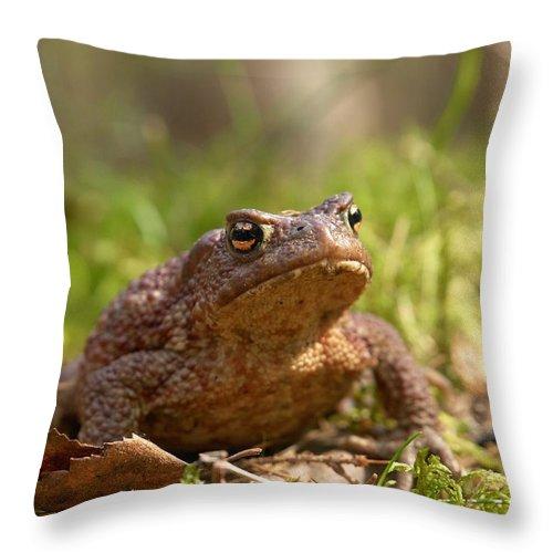 Lehtokukka Throw Pillow featuring the photograph The Common Toad 3 by Jouko Lehto