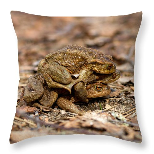 Seitseminen Throw Pillow featuring the photograph Three Is A Crowd by Jouko Lehto