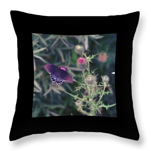 Butterfly Throw Pillow featuring the photograph 060207-13 by Mike Davis