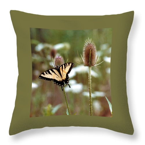 Butterfly Throw Pillow featuring the photograph 070406-84 by Mike Davis