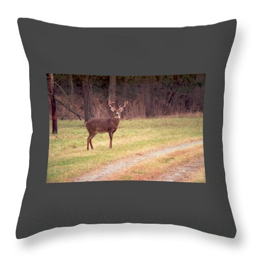 Deer Throw Pillow featuring the photograph 070506-17 by Mike Davis