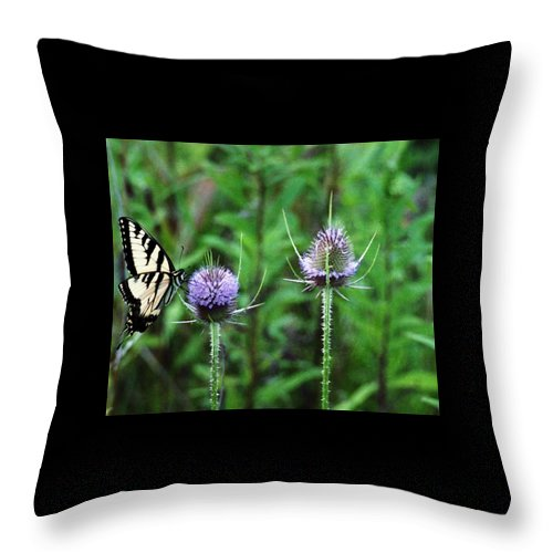 Butterfly Throw Pillow featuring the photograph 072206-2 by Mike Davis