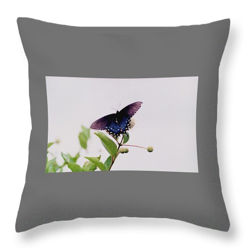 Butterfly Throw Pillow featuring the photograph 080706-5 by Mike Davis