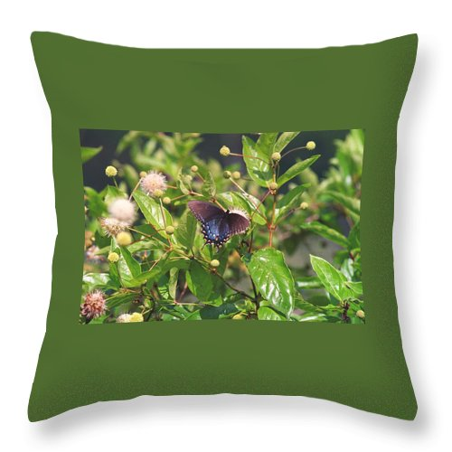 Butterfly Throw Pillow featuring the photograph 080706-6 by Mike Davis