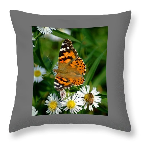 Butterfly Throw Pillow featuring the photograph 092209-133  Seperate Tables by Mike Davis