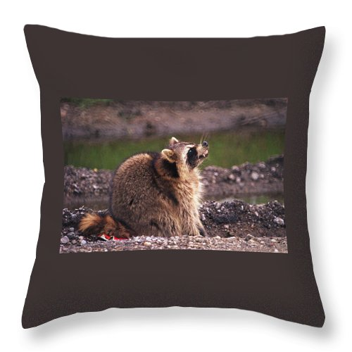 Raccoon Throw Pillow featuring the photograph 070406-67 by Mike Davis