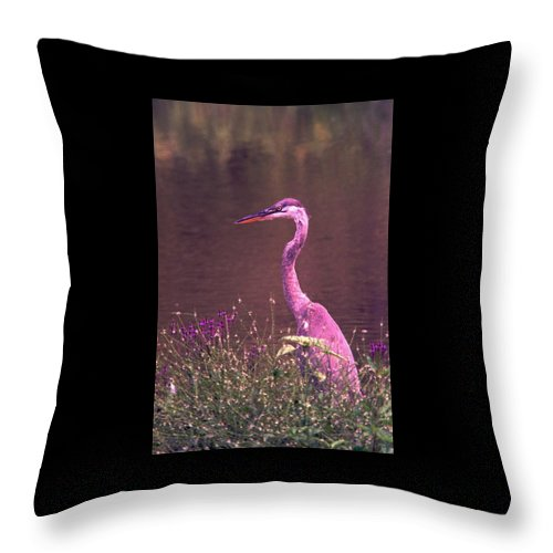Great Blue Heron Throw Pillow featuring the photograph 080706-12 by Mike Davis