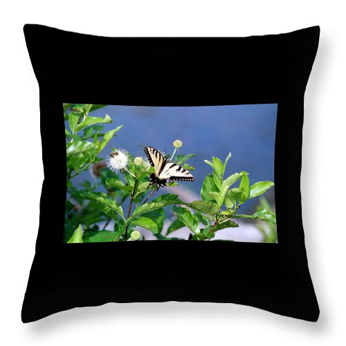 Butterfly Throw Pillow featuring the photograph 080706-7 by Mike Davis