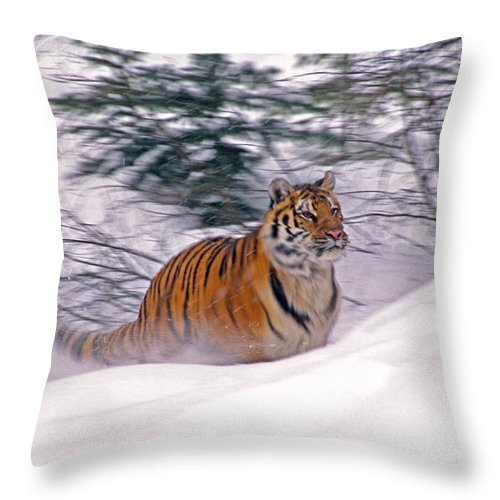 Tiger Throw Pillow featuring the photograph A Blur Of Tiger by Michele Burgess