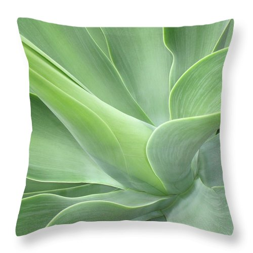 Agave Throw Pillow featuring the photograph Agave Attenuata Abstract by Bel Menpes