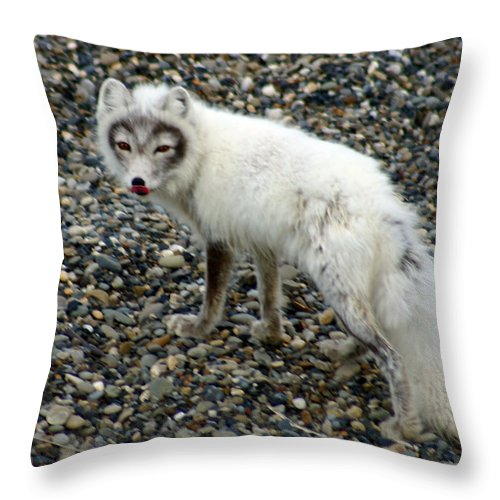 Arctic Fox Throw Pillow featuring the photograph Arctic Fox by Anthony Jones