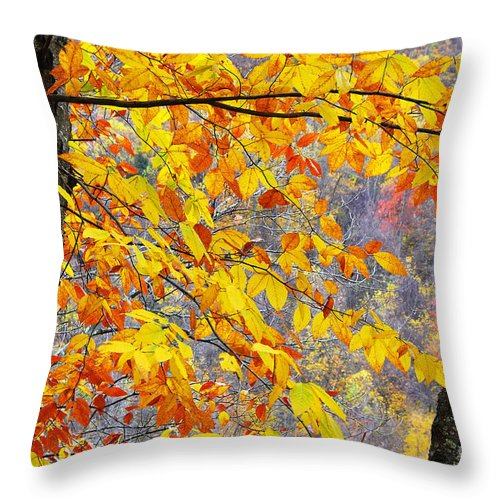 Autumn Throw Pillow featuring the photograph Autumn Beech Leaves by Thomas R Fletcher
