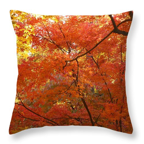 Autumn Throw Pillow featuring the photograph Autumn Gold by Carol Groenen