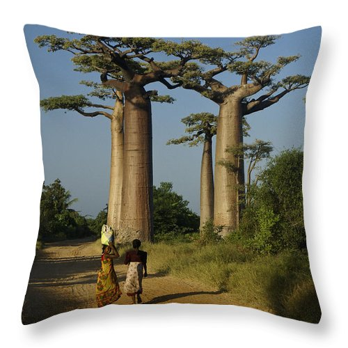 Madagascar Throw Pillow featuring the photograph Avenue Des Baobabs by Michele Burgess