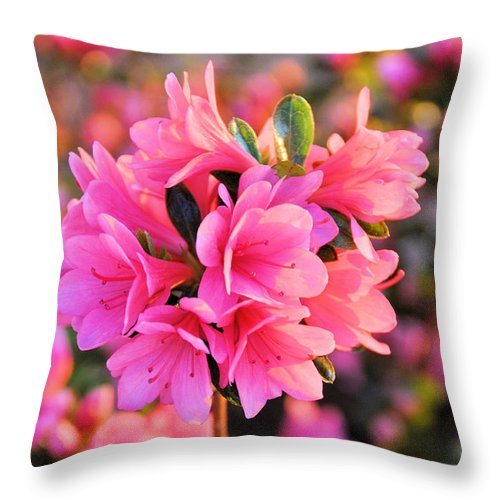 Floral Throw Pillow featuring the photograph Azalea Petites by Jan Amiss Photography