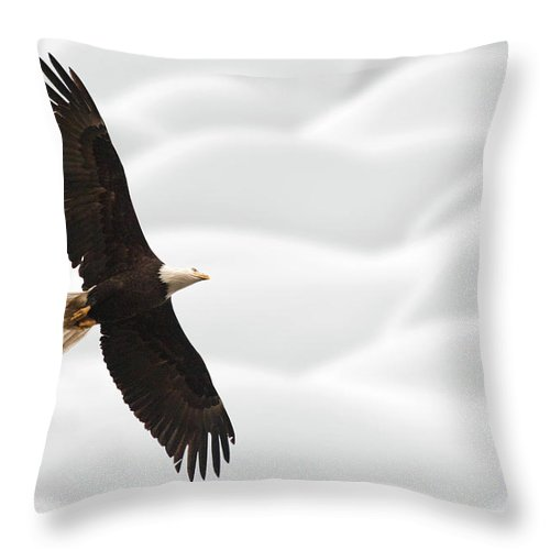Bald Eagle British Columbia In Flight Throw Pillow For Sale By Mark Duffy 18 X 18