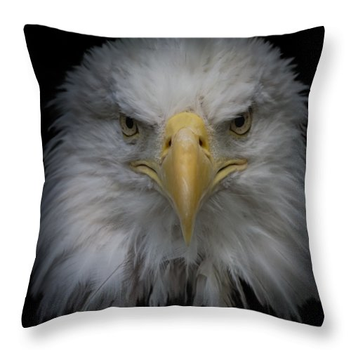 Animal Throw Pillow featuring the photograph Bald Eagle by Ernie Echols