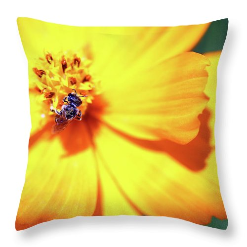 Bee Throw Pillow featuring the photograph Bee Orange by Mary Haber