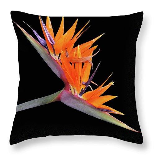 Flower Photos Throw Pillow featuring the photograph Bird Of Paradise by Maria Ollman