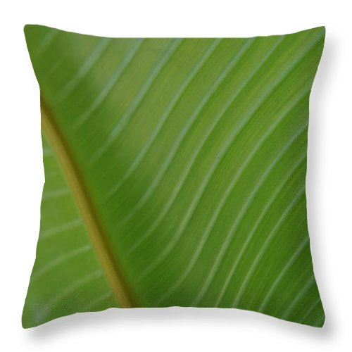 Birds Of Paradise Throw Pillow featuring the photograph Birds Of Paradise by Kelly Wade