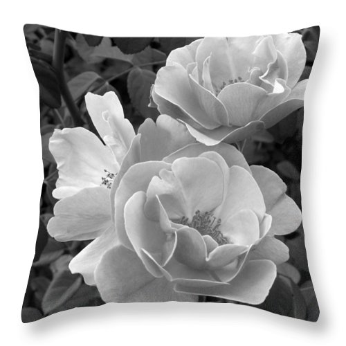 Rose Throw Pillow featuring the photograph Black And White Roses 2 by Amy Fose