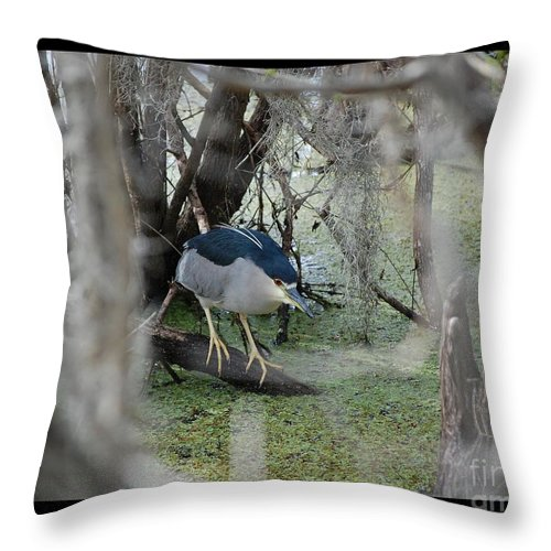 Heron Throw Pillow featuring the photograph Black Crowned Night Heron by Robert Meanor