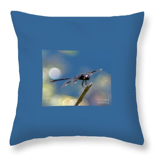 Black Throw Pillow featuring the photograph Black Spotted Dragonfly by Stephen Whalen