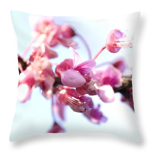 Pink Flowers Throw Pillow featuring the photograph Blossoms by Jessica Wakefield