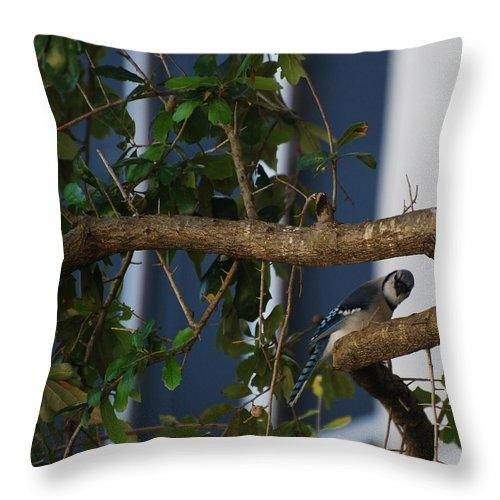 Birds Throw Pillow featuring the photograph Blue Bird by Rob Hans
