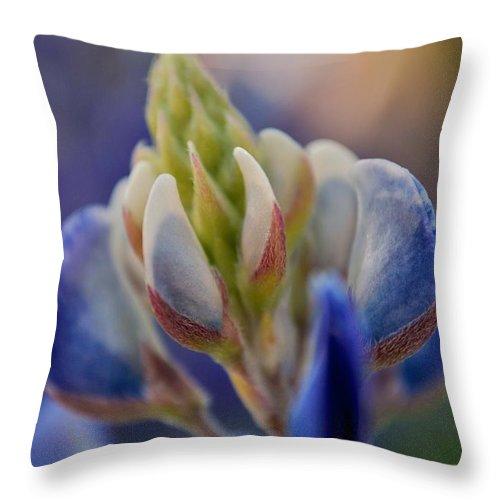 Bluebonnets Throw Pillow featuring the photograph Bluebonnet by Donna Shahan