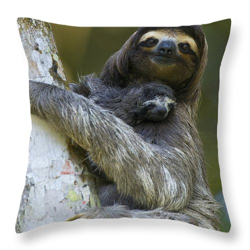 Mp Throw Pillow featuring the photograph Brown-throated Three-toed Sloth by Suzi Eszterhas