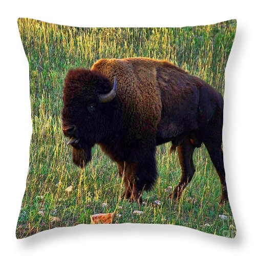 Buffalo Throw Pillow featuring the photograph Buffalo Custer State Park by Tommy Anderson