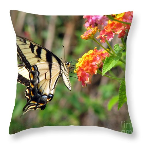 Butterfly Throw Pillow featuring the photograph Butterfly by Amanda Barcon