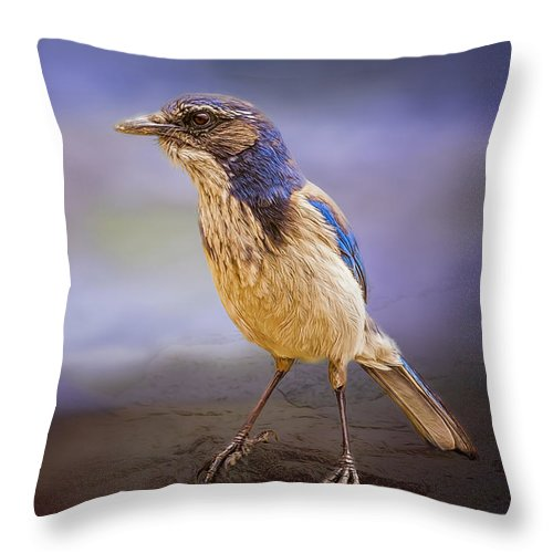 Animal Throw Pillow featuring the photograph Blue Scrub Jay by Maria Coulson