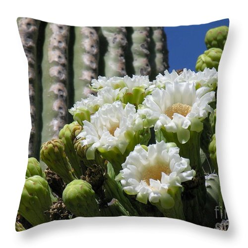Cactus Throw Pillow featuring the photograph Cactus Budding by Diane Greco-Lesser
