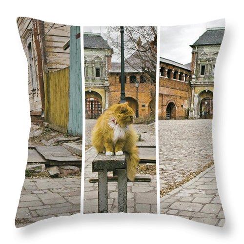 Cat Throw Pillow featuring the photograph Cat by Svetlana Batalina