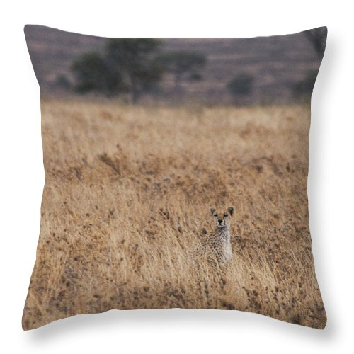 Cheetah Throw Pillow featuring the photograph Cheetah In The Tall Grass by Marc Levine