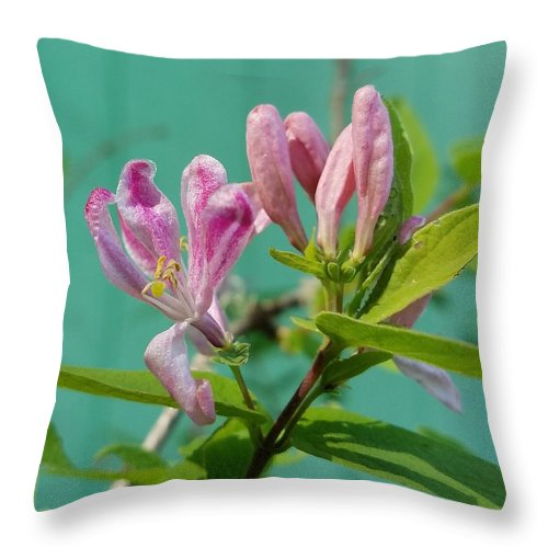 Chinese Honeysuckle Throw Pillow featuring the photograph Chinese Honeysuckle by Teresa A Lang