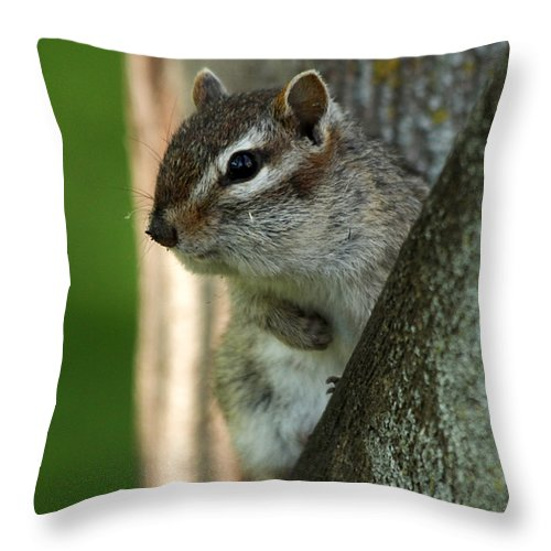 Chipmunk Throw Pillow featuring the photograph Chipmunk by Lori Tordsen