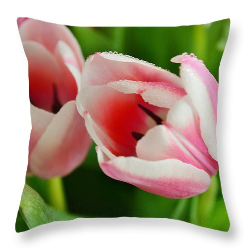 Copyright Felicia Tica 2016 Throw Pillow featuring the photograph Close To You by Felicia Tica