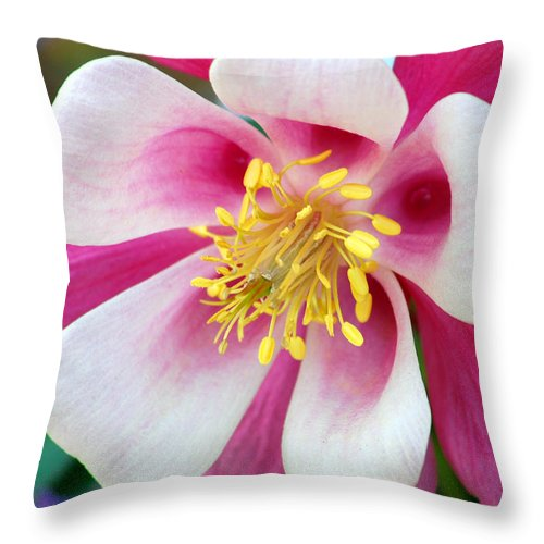 Columbine Throw Pillow featuring the photograph Columbine Flower 1 by Amy Fose