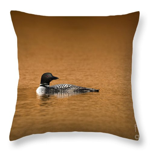 Loon Throw Pillow featuring the photograph Common Loon by Charles Owens