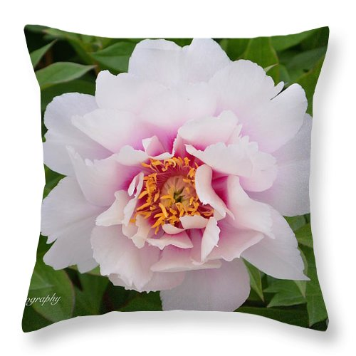 Cora Louise Peony Throw Pillow featuring the photograph Cora Louise by Jeannie Rhode
